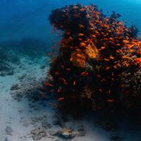 jordan_aqaba_coral_reef_05